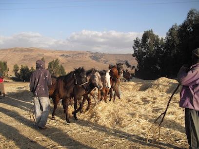 Family farming