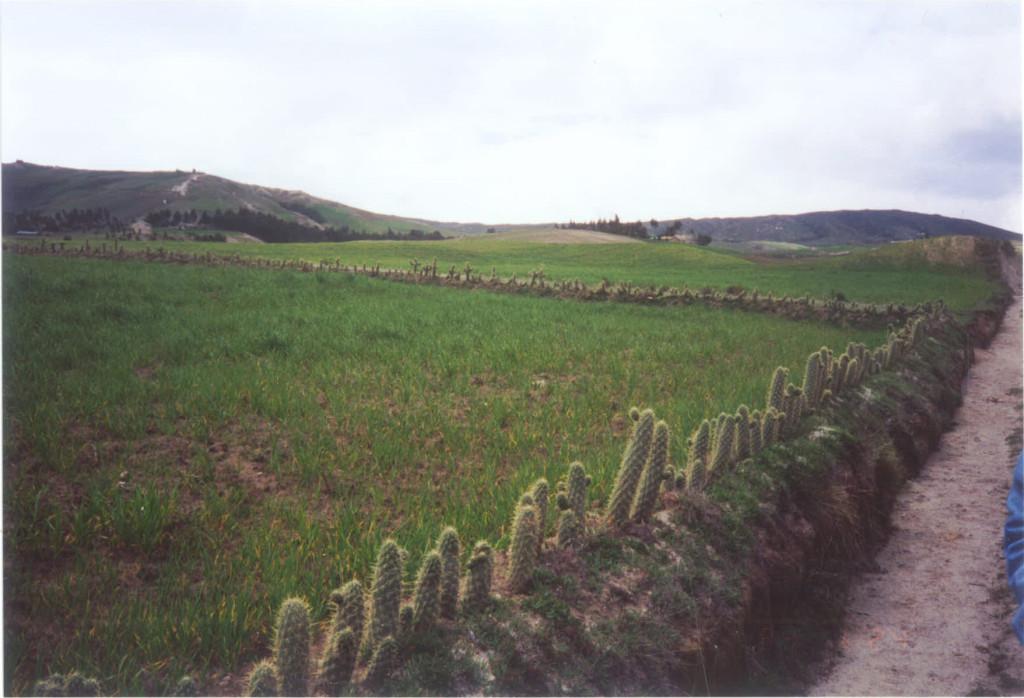Equador's cactus fencing