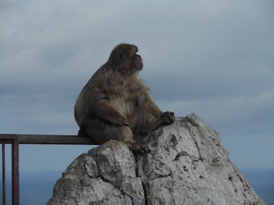 taking in the view from the summit