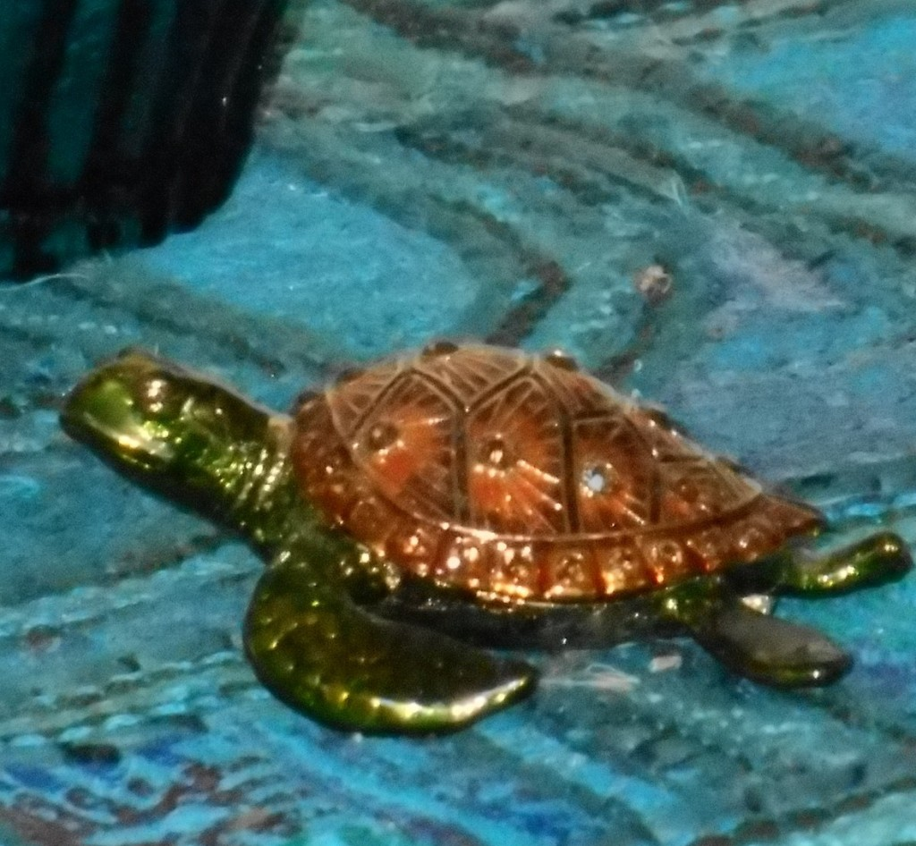 turtle memories
