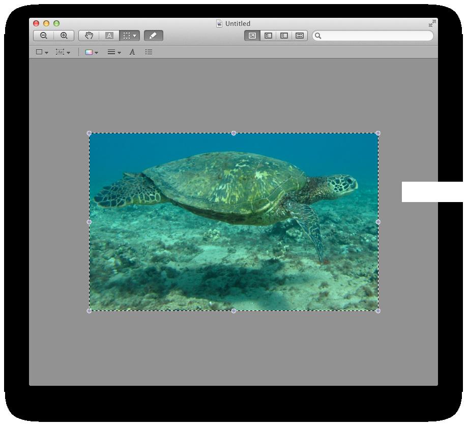 Similar turtle off Maui Coast