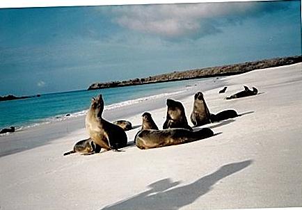 Sea Lion C