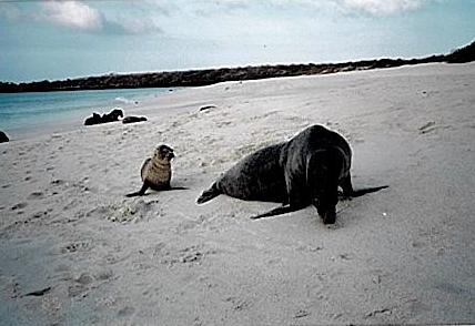 Sea Lion D