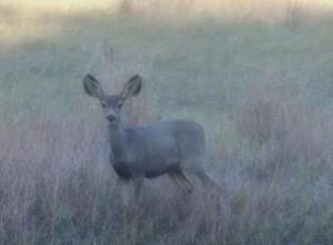a deer deciding