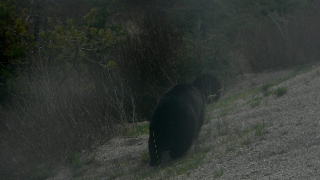 This bear wasn't interested in me.