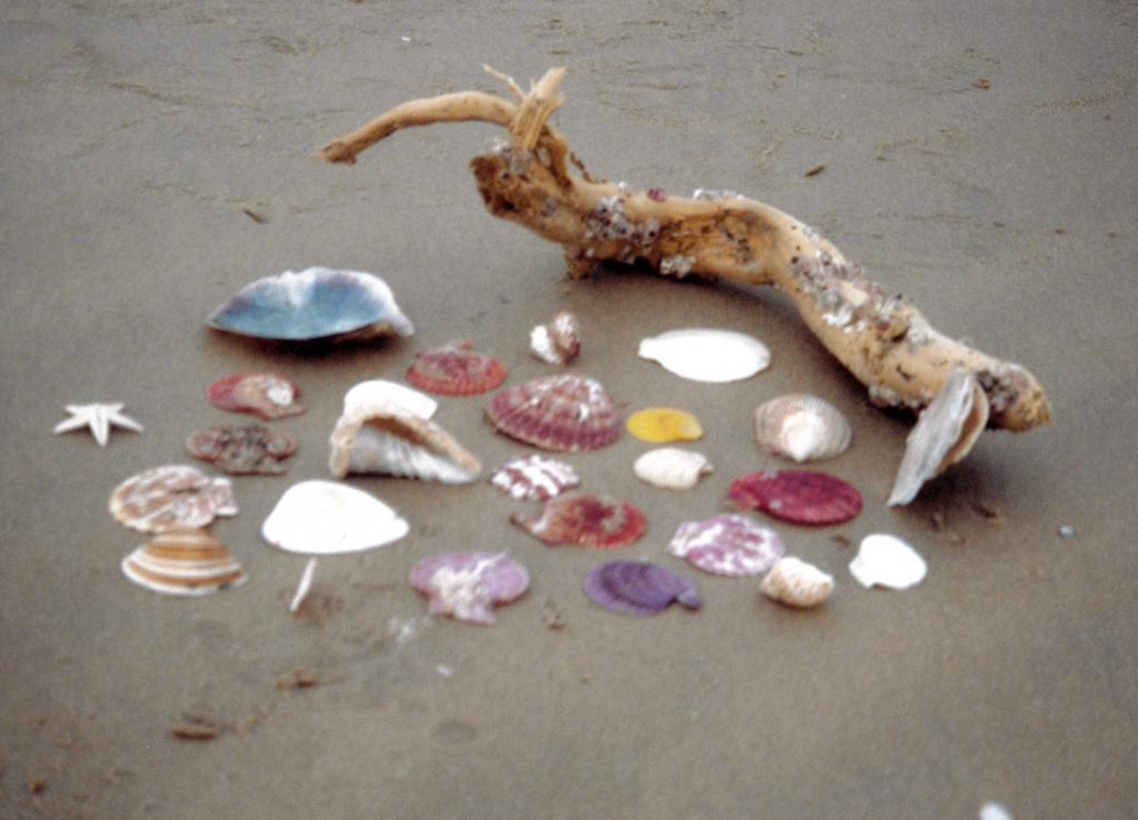 She sells seashells down by the seashore; but I don't.